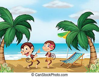 chodząc, małpy, dwa, hawajczyk, odziewać