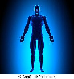 ciało, błękitny, pełny, conce, -, prospekt przodu
