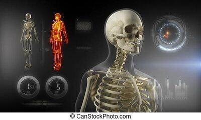 ciało, interfejs, ekran, medyczny, ludzki