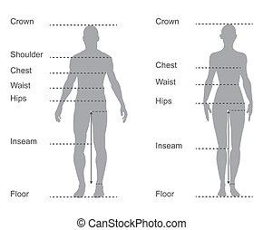 ciało, pomiary, diagram, wykres, samica, mierzenie, samiec, odzież, rozmiar