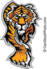 ciało, tiger, wektor, maskotka, graficzny