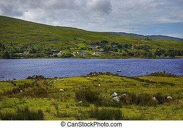 cichy, connemara, krajobraz, irlandia