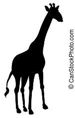 cień, żyrafa
