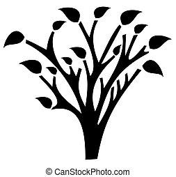 cień, drzewo