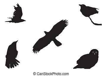 cielna, ptaszki