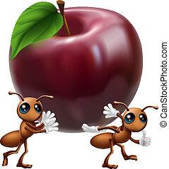 cielna, transport, jabłko, mrówki