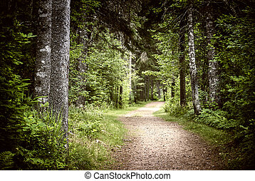 ciemny, ścieżka, las, nastrojowy