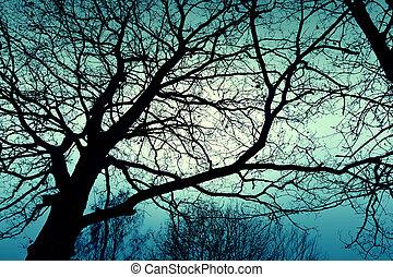 ciemny, drzewo., zima, zmarły
