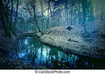 ciemny, forest., magiczny, tajemniczy