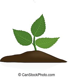 ciemny, gleba, roślina, młody, odizolowany