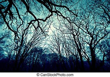 ciemny, tło., zima, las
