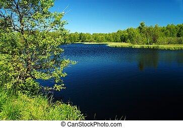 ciemny, wrzosowisko, jezioro, th