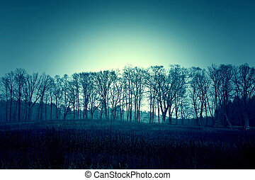 ciemny, zmarły, zima drzewa, sky.