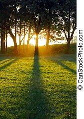 cienie, słońce, zmontowanie, odlew, drzewo