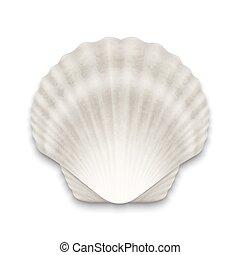 closeup, zamknięty, muszelka, realistyczny, seashell, odizolowany, template., prospekt, perła, ikona, wektor, projektować, tło., górny, 3d, biały
