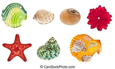 collage, obiekty, morze