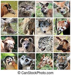 collage, ssaki, zwierzę