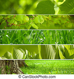 collage, tło., zielony, natura