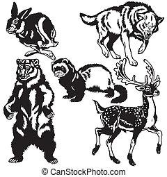 czarnoskóry, komplet, zwierzęta, biały