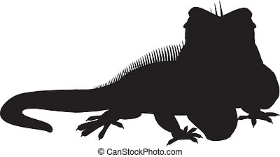 czarnoskóry, sylwetka, iguana