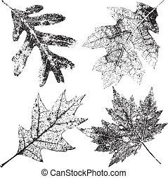 cztery, grungy, liście, upadek