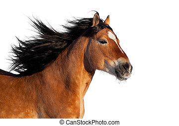 czynny, koń, głowa, odizolowany, zatoka