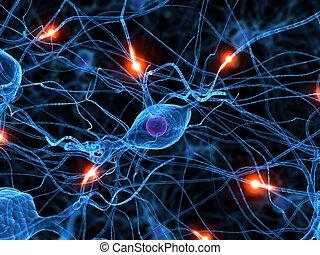 czynny, nerw, komórka