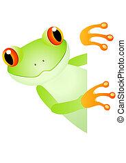 czysty, zielona żaba, przestrzeń