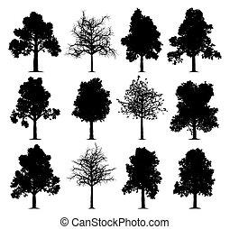 dąb, drzewa