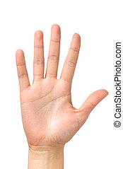 dłoń, odizolowany, samicza ręka