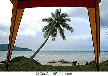 dłoń plaża, piasek, drzewo