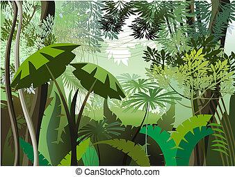 dżungla, dzień