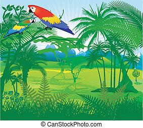 dżungla, papuga