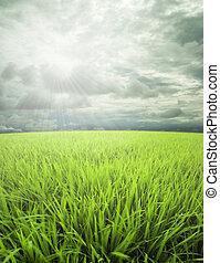 dan, niebo, łąka, światło słoneczne