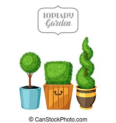 dekoracyjny, plants., ogród, drzewa, bukszpan, topiary, wazony