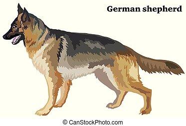 dekoracyjny, reputacja, barwny, pasterz, niemiec, pies, ilustracja, wektor, portret