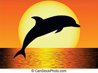 delfin, sylwetka
