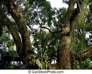 deszcz las, amazonian, drzewo