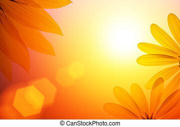details., światło słoneczne, tło, słonecznik