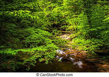 dolina górska, felieton, potok, soczysty, stan, las, kaskady, ricketts