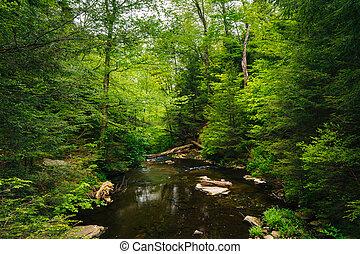 dolina górska, park, las, zatoczka, stan, soczysty, pennsylvania., ricketts