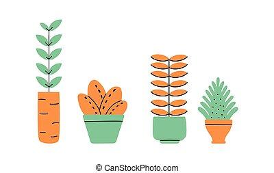 dom, kwiaty, rośliny, collection., vases., wazony