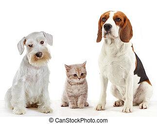 domowe psy, zwierzęta, trzy, kot