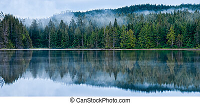 doskonały, mglisty las, odbicie jezioro