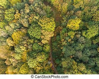 dróżka, antena, kraj, autumn las, prospekt