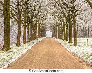 dróżka, friesland, zima, droga, mroźny