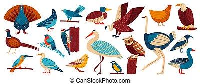 drób, wektor, dom, dziki, rysunek, europejczyk, komplet, ilustracja, mewa, chicken., piać, gołąb, ptaszki, sowa, zbiór, ptaszki, kawka