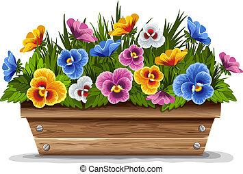 drewniany, garnek, kwiat, bratki