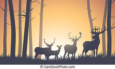 drewno, jeleń, sunset.