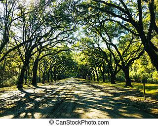 droga, drzewo kreskowane, usa, łuk, historyczny, georginia, dąb, plantacja, wormsloe, savannah, formułować